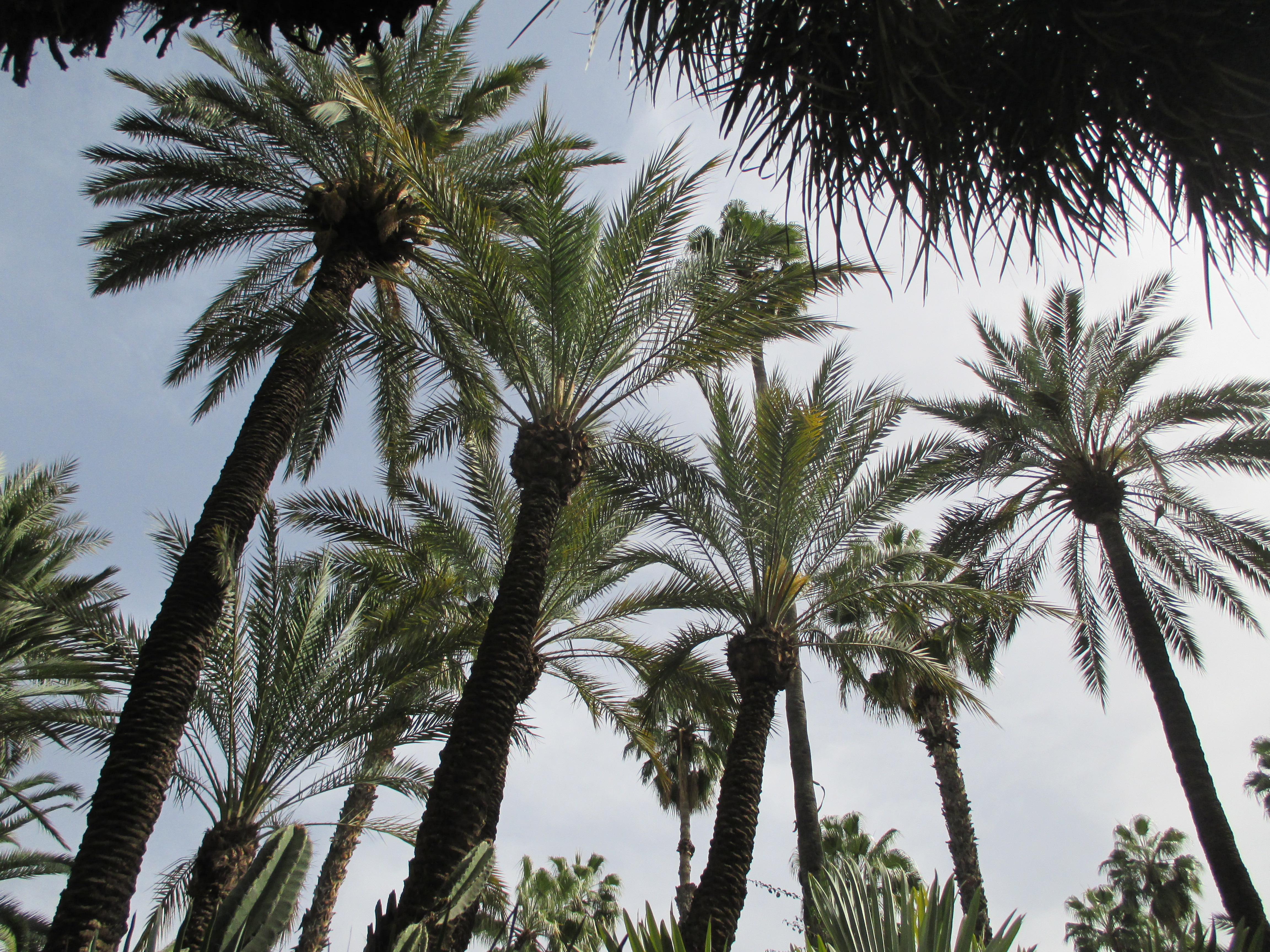 Palmen, Jardin Majorelle, Marrakesch